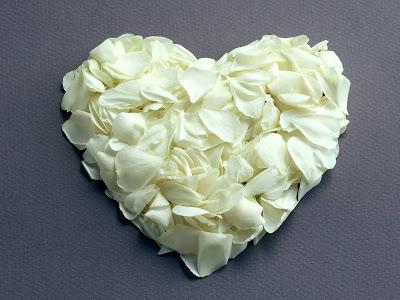white_rose_1600x1200